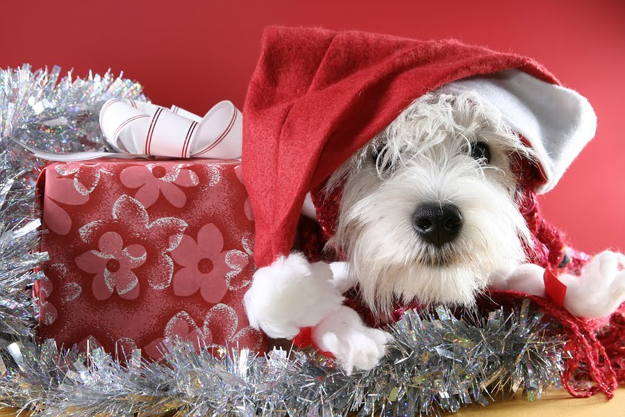 Christmas-Puppy-Pictures