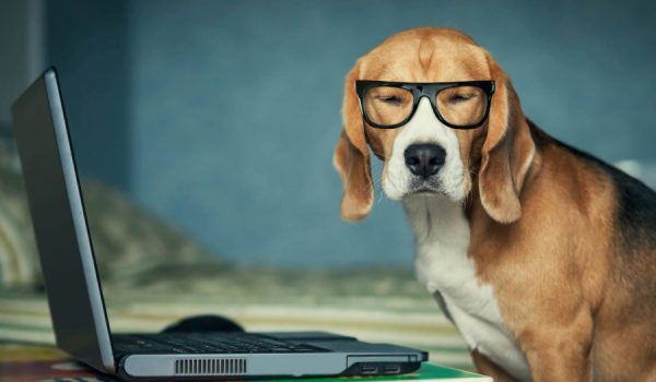 dog-fixing-computer-issues