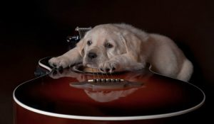 76142__cute-dog-and-a-guitar_p