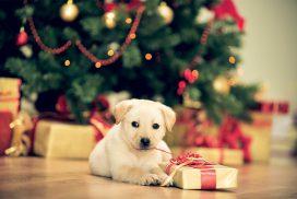 Boldog, békés karácsonyt kívánunk !